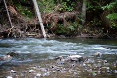 Fluxo do rio em Slovensky Raj imagens de stock royalty free