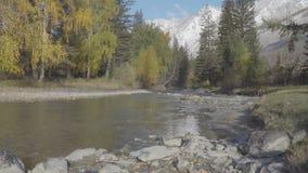 Fluxo do rio sobre a paisagem bonita das rochas na estação do outono da queda das montanhas de Altai filme