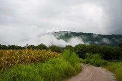 Fluxo do vento da névoa fotografia de stock