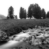 Fluxo preto e branco do rio Imagem de Stock