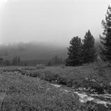 Fluxo preto e branco do rio Foto de Stock