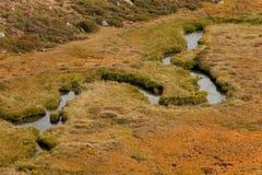 Fluxos de córrego pequenos no prado, na atmosfera outonal Fotografia de Stock