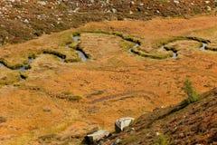 Fluxos de córrego pequenos no prado, na atmosfera outonal Imagens de Stock Royalty Free