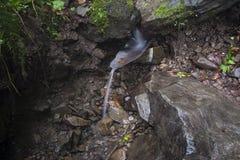 Fluxos de córrego de uma mola da montanha fotografia de stock