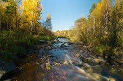 Fluya en el bosque del otoño, Urales, Rusia Fotografía de archivo libre de regalías