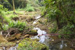 Fluya en el bosque un flujo rápido de agua Fotos de archivo