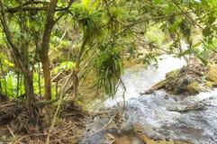 Fluya en el bosque un flujo rápido de agua Fotografía de archivo libre de regalías