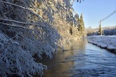 Fluya en el invierno con el abedul escarchado en primero plano Fotos de archivo