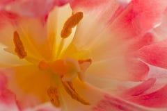 Flwer cor-de-rosa Fotos de Stock Royalty Free