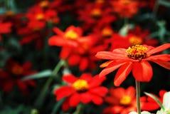 Flwoer rouge Photographie stock libre de droits