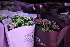 Flwoers wiosny w denamrk Fotografia Royalty Free