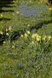 Flwoers wiosny w denamrk Zdjęcie Stock
