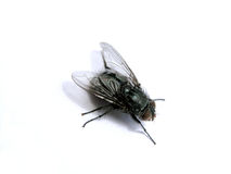 Fly 1 Royalty Free Stock Image