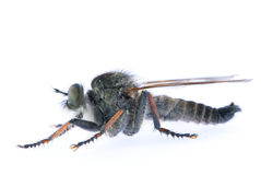 Fly 14 royalty free stock image