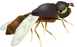 Fly. Animals infect insect mosquito parasitic pest vector illustration