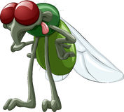 Fly. Green fly with red eyes, vector stock illustration