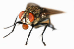 Fly Royalty Free Stock Photos