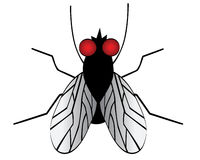 A fly. There is a simply fly vector illustration