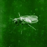 Fly. Royalty Free Stock Image