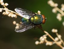 Fly Stock Image