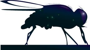 The fly. A vector illustration Stock Photography