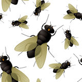 Fly. Seamless fly insect background that repeats without a join Stock Photo