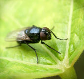 Fly......(5) Stock Images