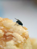 Fly on cake Stock Photos