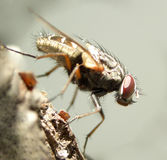 Fly......(7) Royalty Free Stock Image