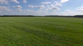 Fly abowe grass field stock video