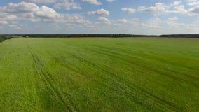 Fly abowe grass green field stock video