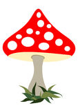 Fly agaric Royalty Free Stock Photo