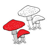 Fly Agaric. In two variants Stock Image