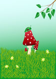 Fly-agaric. Reds fly agarics,  illustration Royalty Free Stock Images