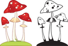 Fly agaric. Vector illustration with death cap fungus. image can be scaled to any size without loss of resolution Stock Images