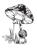 Fly agaric. Outline illustration of fly agaric mushroom Royalty Free Stock Photography