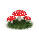 Fly agaric on the lawn. The concept of fly-agaric (Amanita) on the green lawn, to illustrate the idea Stock Image