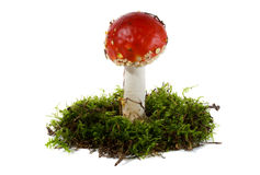 Fly agaric in moss Stock Photos