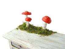 Photo Fly agaric with moss. Photo for illustration of nature, mushrooms and forest. Symbol of Poisonous mushroom Stock Images