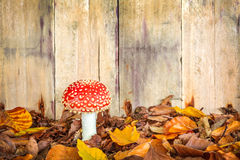 Fly agaric mushroom against an old wooden background Stock Image