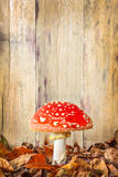 Fly agaric mushroom against an old wooden background Royalty Free Stock Images