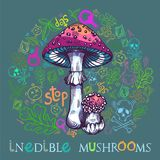 Fly agaric mushroom. In engraved style. Fully editable vector mushroom illustration with warning icons, nature elements and lettering royalty free illustration
