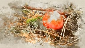 Fly agaric mushroom in the grass close up stock photography