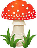 Fly agaric Mushroom Royalty Free Stock Photos