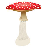 Fly agaric mushroom isolated on white background. Vector Illustration Stock Image