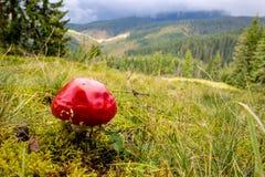 Fly agaric mushroom on mountain meadow Stock Photos