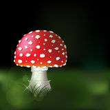 Fly agaric mushroom Royalty Free Stock Images