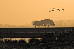 Fly away. Landscape nature shot with bird silhouettes stock photos