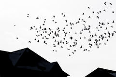 Fly away heart. Birds fly over rooftops of homes Stock Photos