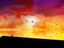 Fly away home and  wait to come home Stock Photo